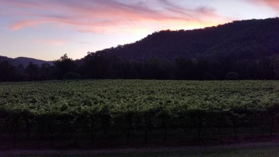 Cedar Creek, Αυστραλία: The gorgeous sunset over the vineyards below our cottage