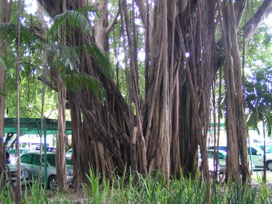 Montien Hotel Pattaya: дерево перед рецепшн