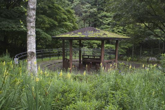 Kamimiyori Hydrophyte Garden