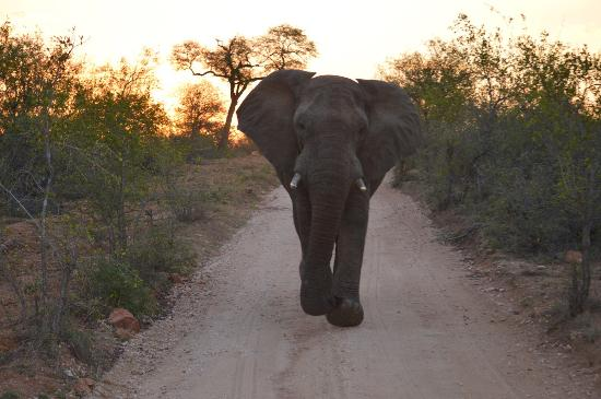 Mohlabetsi Safari Lodge: photo1.jpg