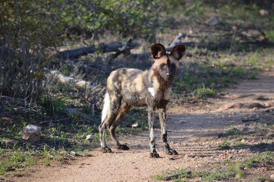 Mohlabetsi Safari Lodge: photo4.jpg