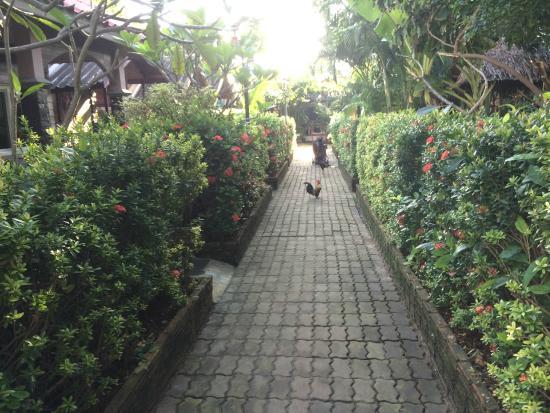 Nid's Bungalows: Петухи которые гуляют по дорожкам и орут по ночам