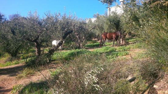 Avdou, Yunani: Horses in olive grove having their lunch while we had ours