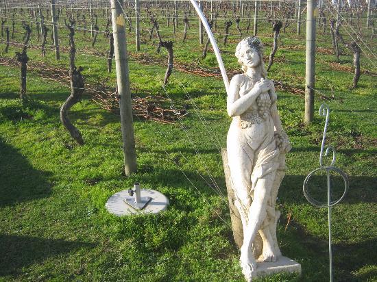Isla Waiheke, Nueva Zelanda: The vineyard - beautiful