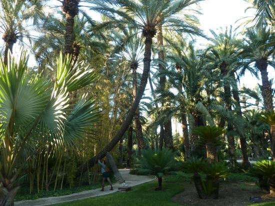 Palmera imperial - Picture of Huerto Del Cura Jardin Artistico Nacional, Elch...