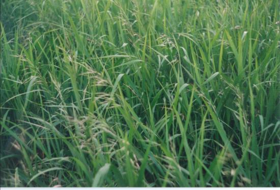 Гранд-Прери, Канада: Lovely grasses