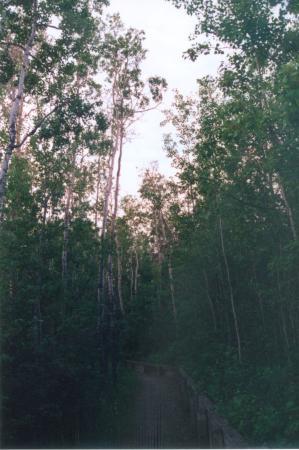 Grande Prairie, Canada: Aspen