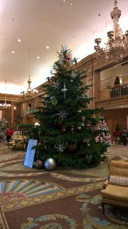 the fairmont olympic seattle the hotel lobby they just put up the christmas tree