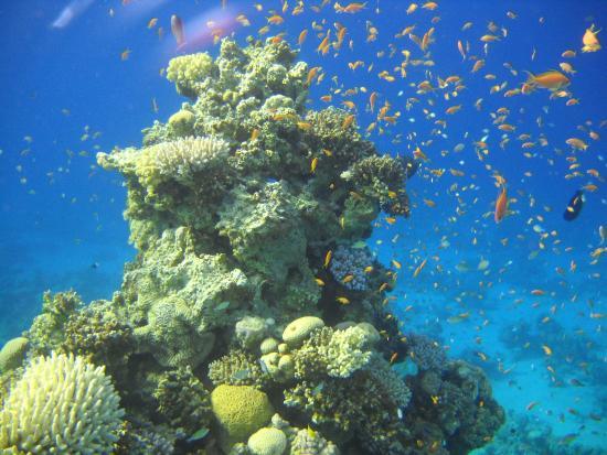 Daniela Diving Centre: Around the Daniela