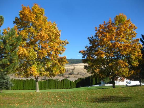 Winfield, Canada: Fall foliage