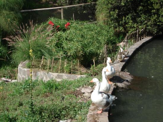 Foto de jard n bot nico mapulemu santiago par sitos de for Jardin japones de santiago