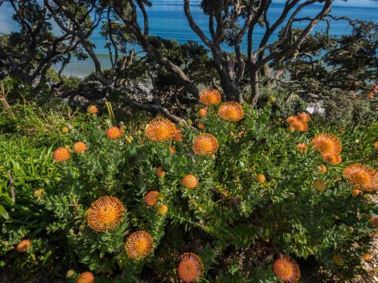 Coopers Beach, Selandia Baru: Garden view from the bedroom