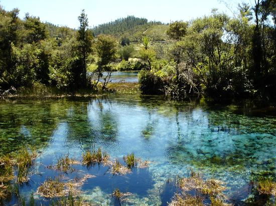 Tops Adventure Tours - Day Tours: Te Waikoropupu Springs