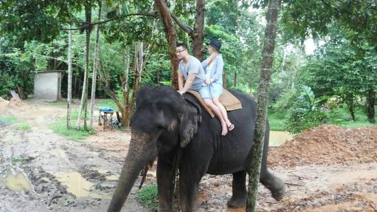 Bentota, Sri Lanka: Pinnawela elephant ophanage