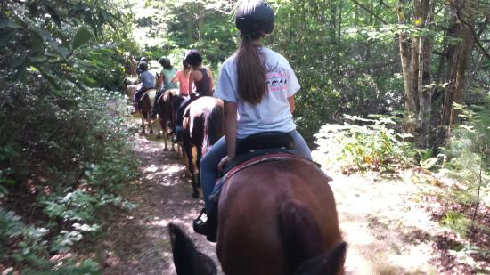 Mills River, NC: Saddle up trail rides