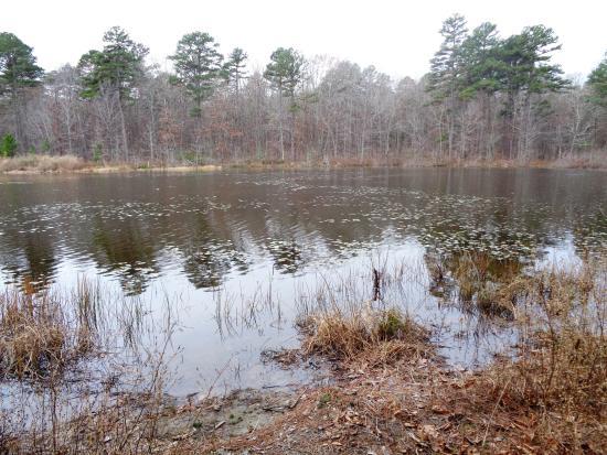 Pinewoods Lake Recreation Area: 6