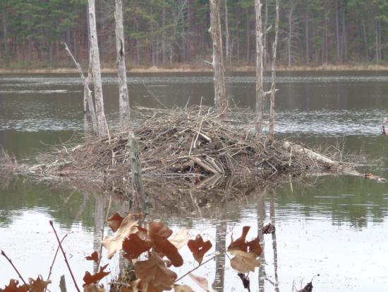 Pinewoods Lake Recreation Area: 5