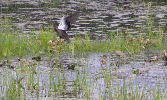 Baileyville, ME: Off Vose Pond Rd
