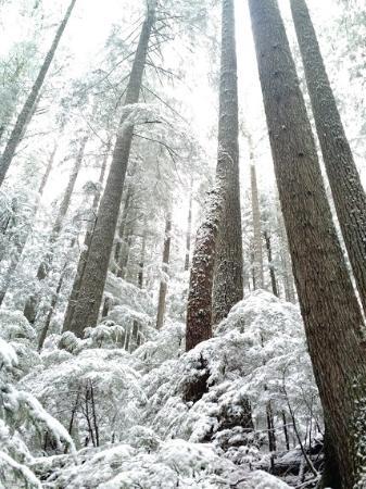 Longmire, วอชิงตัน: Hike just across the road