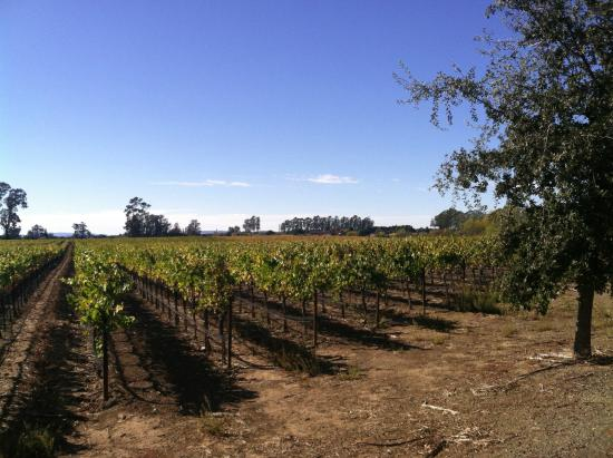 Napa Valley, CA: Stanley Lane