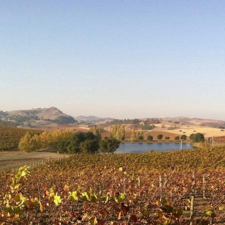Napa Valley, CA: Cuvaison Winery