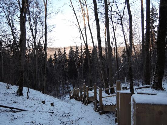 Картинки лесница в небо зимой