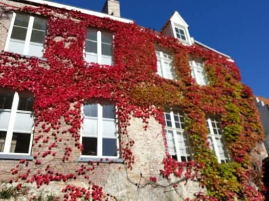 Hotel De Pauw : I will always love Bruges