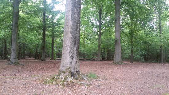 Udenhout, Holandia: De Brand, open vlakte in het bos