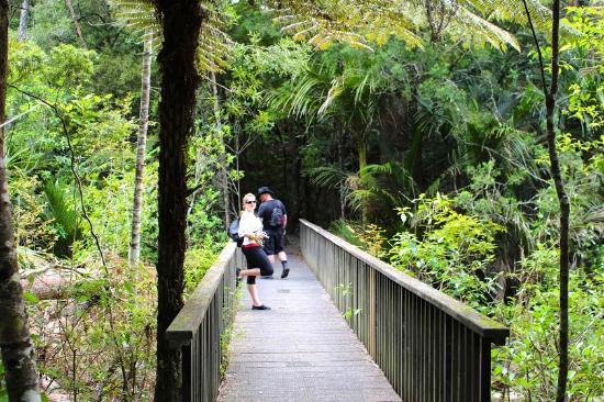 Kauri Park Walkway to Whangarei Falls, New Zealand