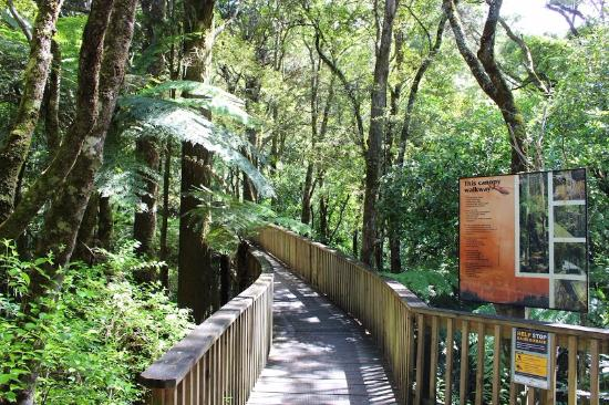 Kauri Park Walkway, Whangarei, New Zealand