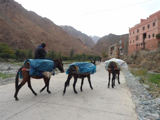 High Atlas Tours - Day Tours: High Atlas Mts Morocco