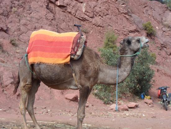High Atlas Tours - Day Tours: Camel Ride High Atlas
