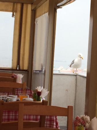 Sultanahmet Suite Life Hotel: Терраса для завтраков