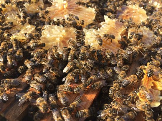 Grand Hotel le Florence: Nos abeilles / Our bees