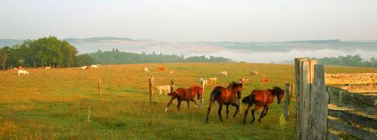 Chevaux en Suisse Normande, campagne du Calvados - crédit Calvados Tourisme