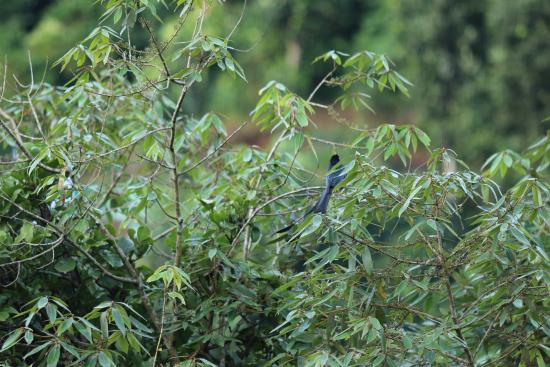 Wild Munnar - Fragrance: Birds 1