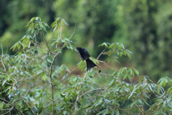 Wild Munnar - Fragrance: Birds 2