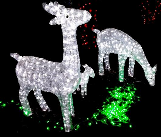 Christmas light display 2013 picture of florida - Largo botanical gardens christmas lights ...
