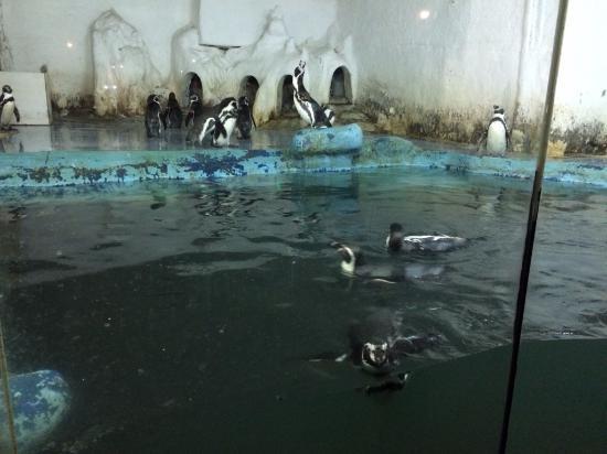 dirty water - Photo de Beijing Underwater World Exhibition, Pekin ...
