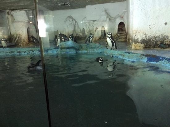 ??????? - Bild von Beijing Underwater World Exhibition ...