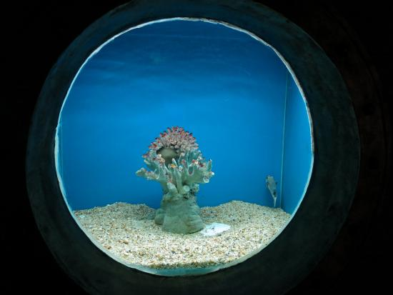 Huanzhutang World Coral and Shellfish Aquarium