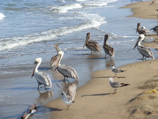 Hacienda Dona Carmen: playa venado