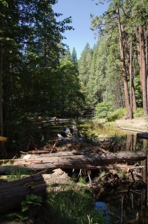 Lower Pines Campground: Yosemite NP