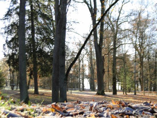 Jogeva, Estland: Kuremaa mõisa park