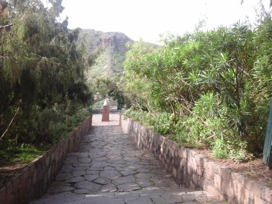 Jardin canario photo de jardin botanico viera clavijo for Villas de jardin seychelles tripadvisor