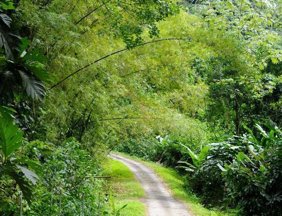 Hiking in Grande Riviere