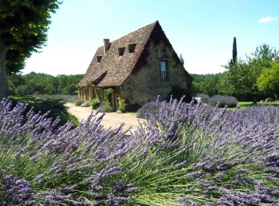Paleyrac, France: LE GITE ET SES LAVANDES