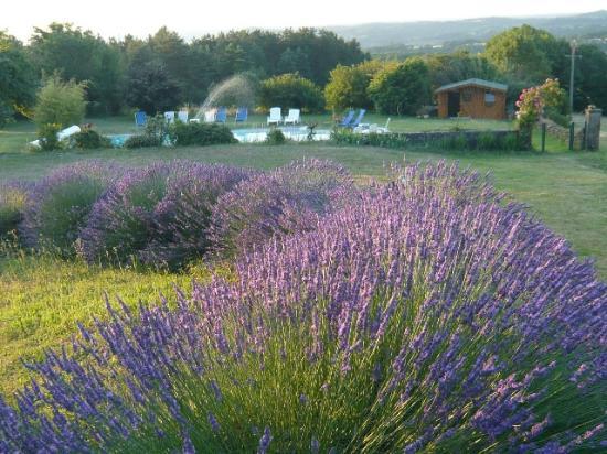 Paleyrac, Prancis: DANSE DE LAVANDES - PISCINE - PANORAMA