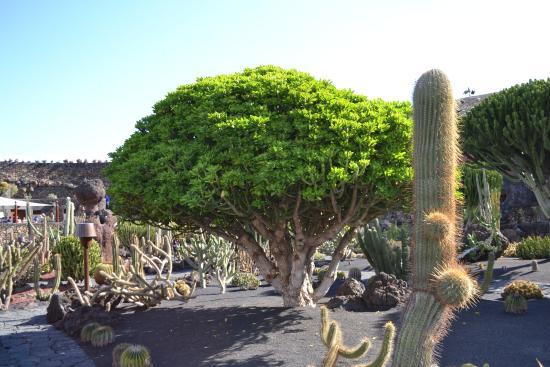 Kaktus - Picture of Jardin de Cactus, Guatiza - TripAdvisor