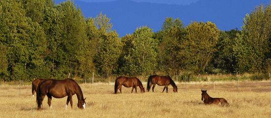 Eugene, OR: Horses along Long Tom Country Trail near Junction City